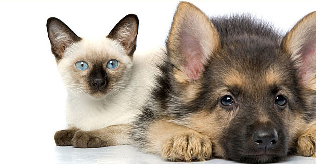 dog-and-cat.jpg